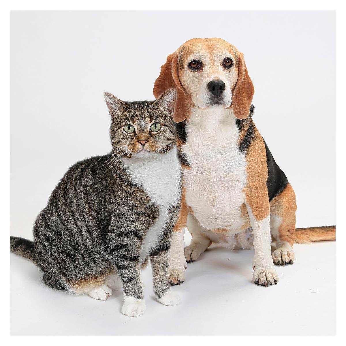 Hund, Katze, Krefeld